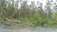 A causa das interrupções foi, principalmente, a queda de árvores sobre a rede elétrica e o rompimento de condutores.